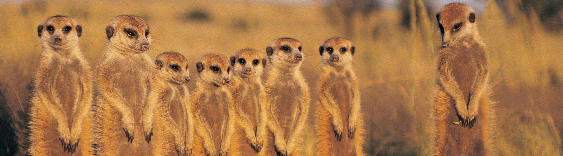 cosa bisogna sapere per organizzare un viaggio in botswana?