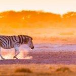 Viaggi in Africa Luxury safari tours